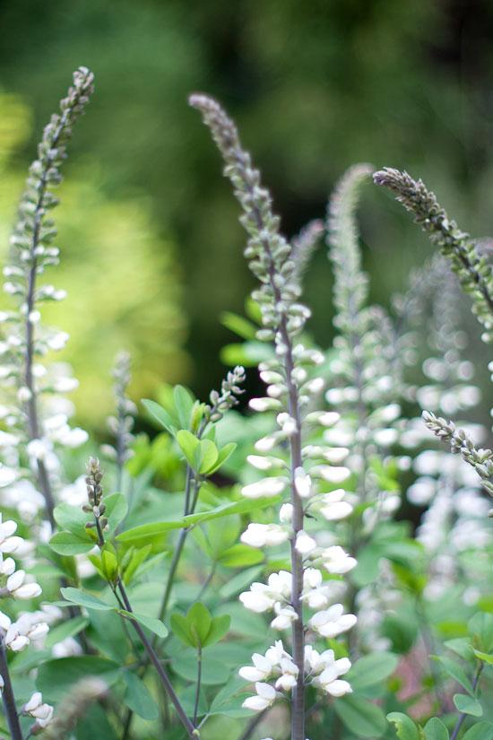 Duke Gardens Flower Photo by Michelle Smith