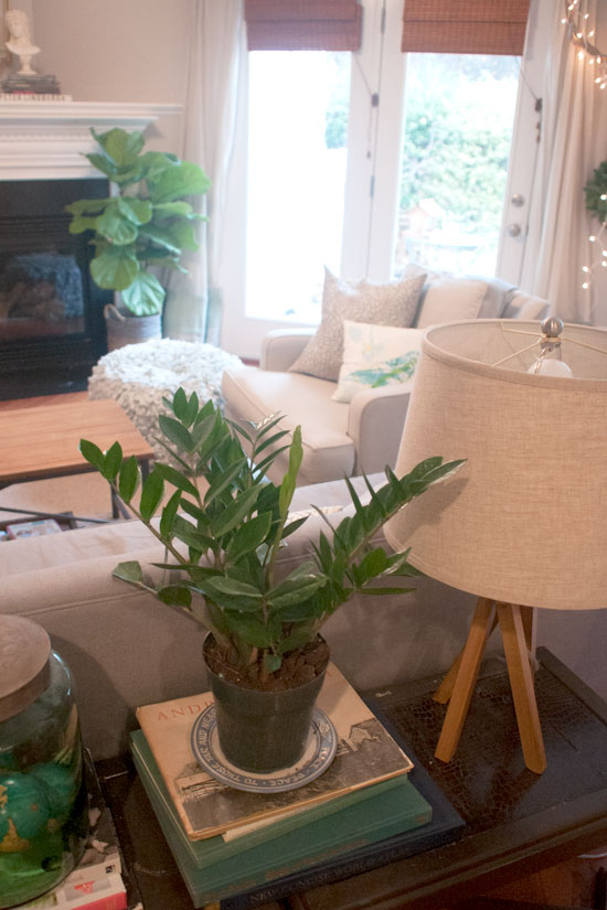 Plants & Living Room Vignette, Michelle Smith's Home
