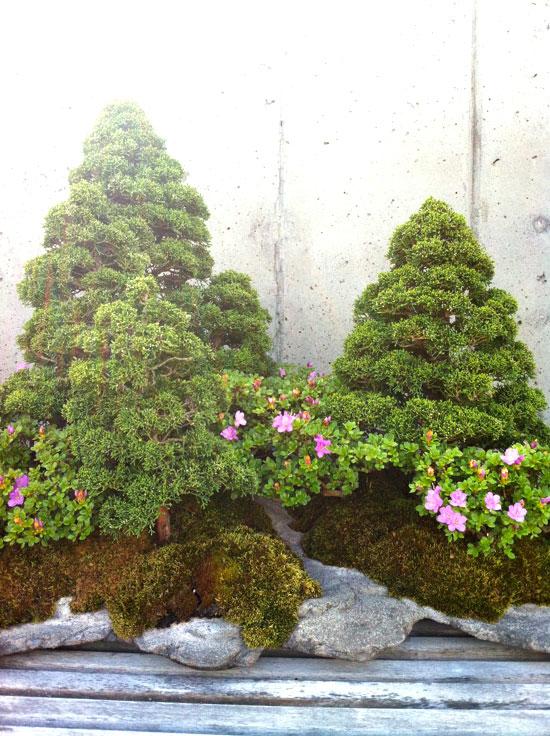 Bonsai, Photo by Michelle Smith