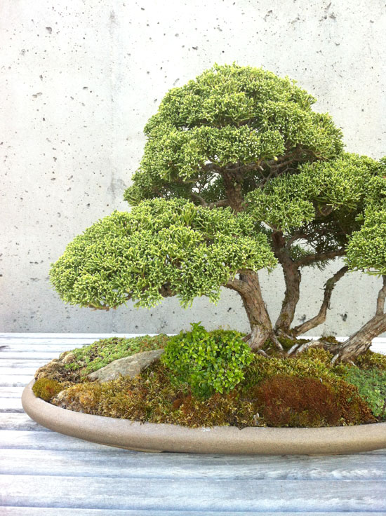 Bonsai, Photo by Michelle Smith