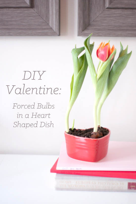 DIY Valentine's Day Gift Idea: Forced Tulip Bulbs in a Heart Shaped Dish