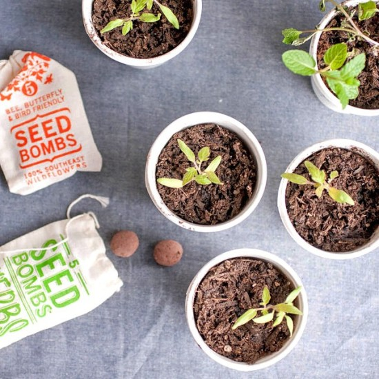 Seed Bombs & Plant Sprouts at Gather in Cary, NC
