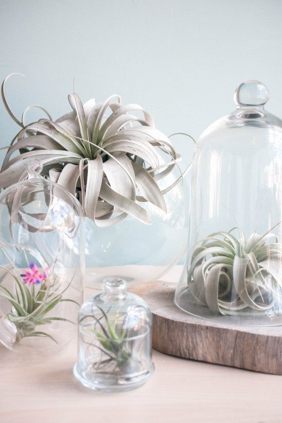 Glass Jars from Book, Modern Terrarium Studio | Photography by Michelle Smith, Authored by Megan George