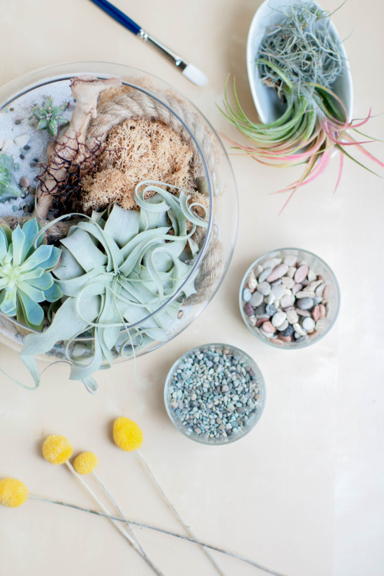 Terrarium from Book, Modern Terrarium Studio | Photography by Michelle Smith, Authored by Megan George
