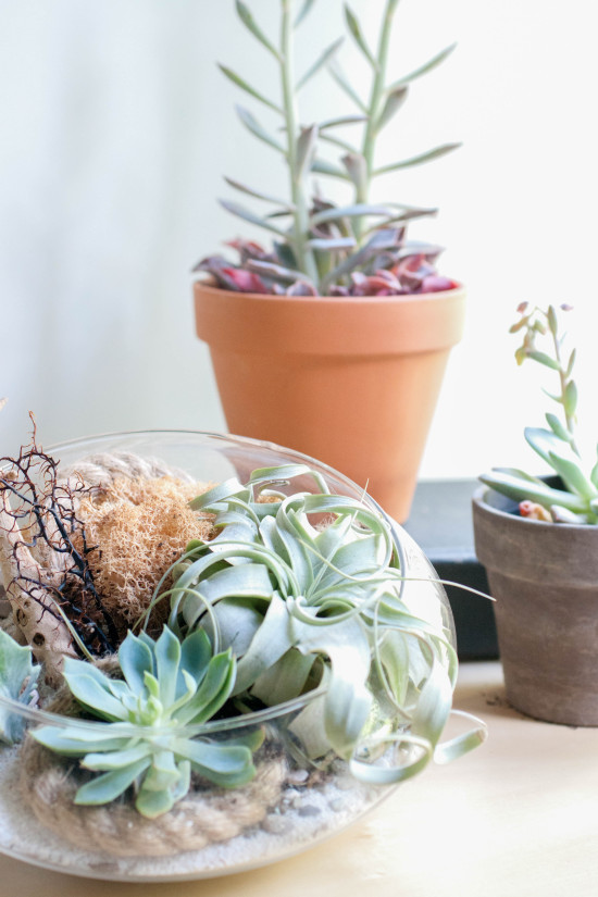 Succulents from Book, Modern Terrarium Studio | Photography by Michelle Smith, Authored by Megan George