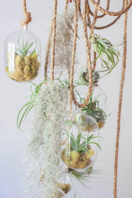 Terrarium Crafts from Book, Modern Terrarium Studio | Photography by Michelle Smith, Authored by Megan George