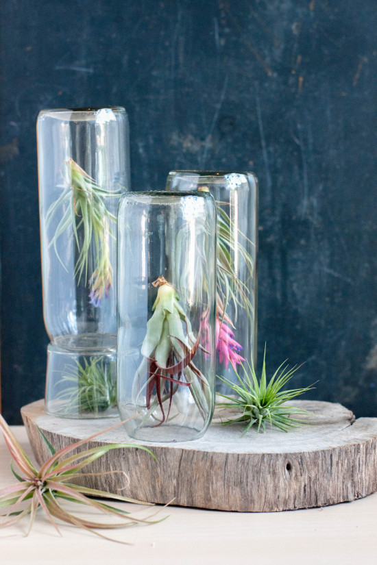 Terrarium Projects | Photography by Michelle Smith