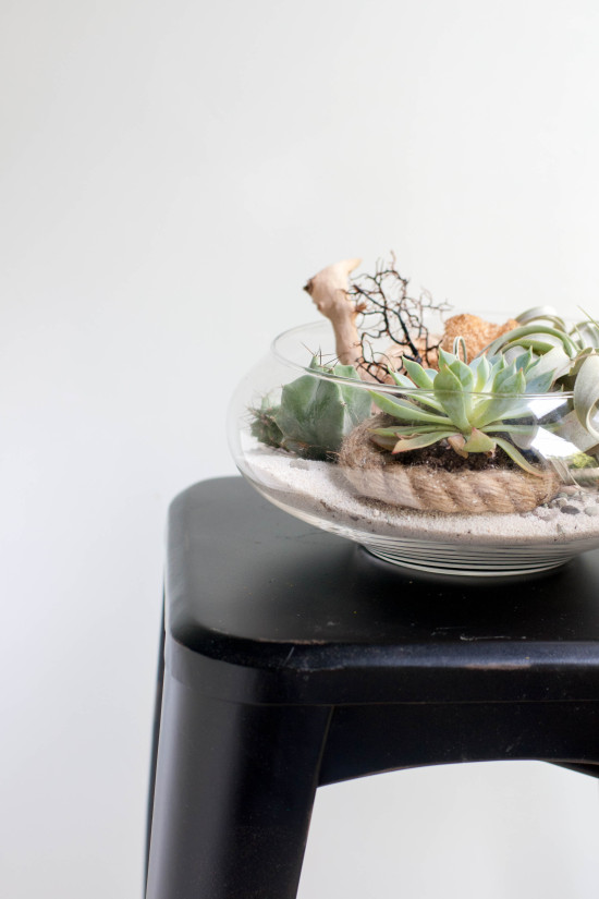 Terrarium | Photography by Michelle Smith