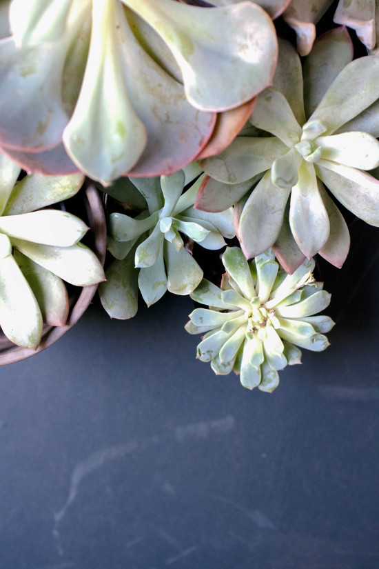 Succulents | Photography by Michelle Smith