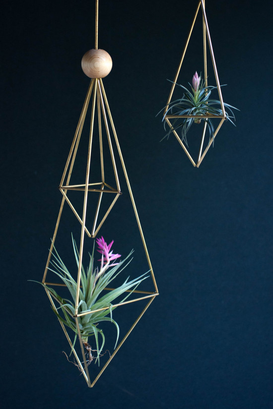 DIY Air Plant Project from Book, Modern Terrarium Studio | Photography by Michelle Smith, Authored by Megan George