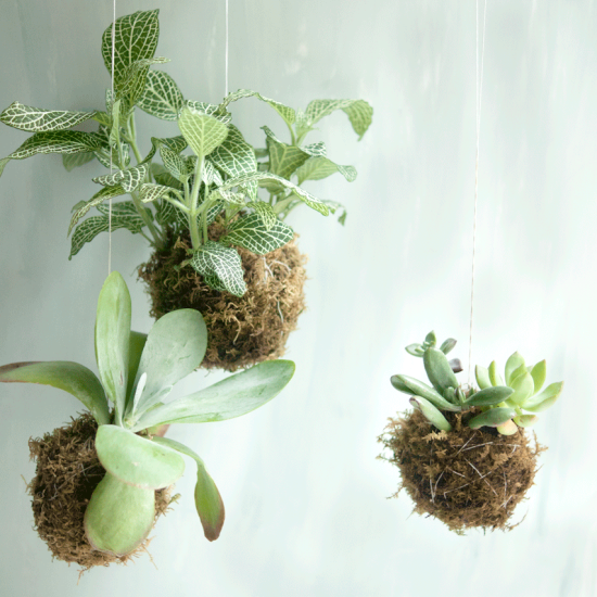 Kokedama Hanging String Garden Class at Gather