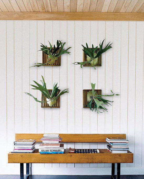 Staghorn Fern Collection in a Hallway