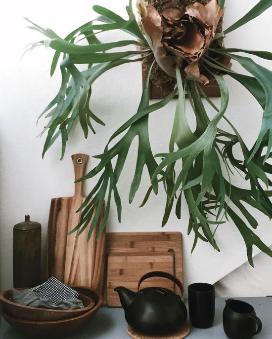 Kitchen Vigentte with Staghorn Fern