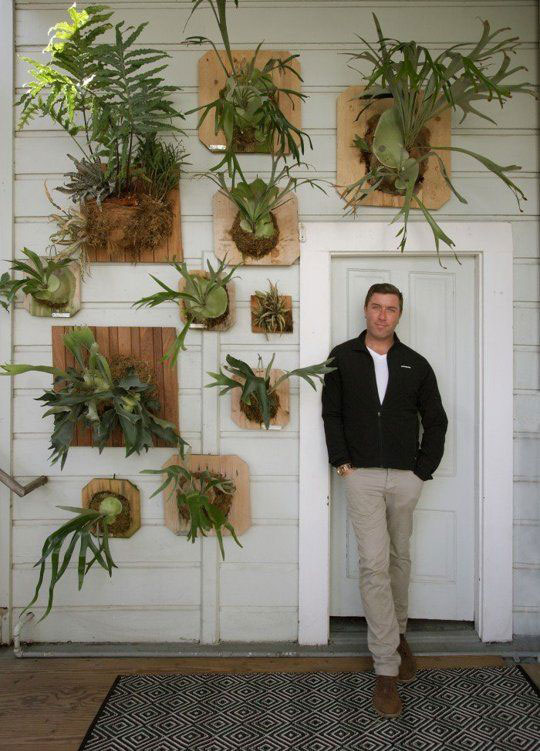 Staghorn Fern Collection in Hallway, White Shiplap Walls