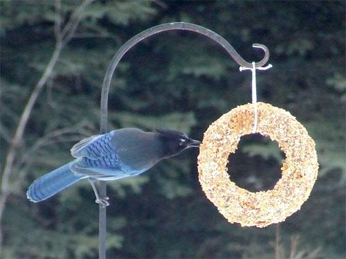 birdseed