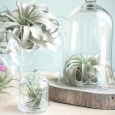 Photographer for the book Modern Terrarium Studio